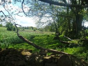 the wetlands_std