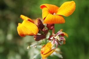 yellow flower_std